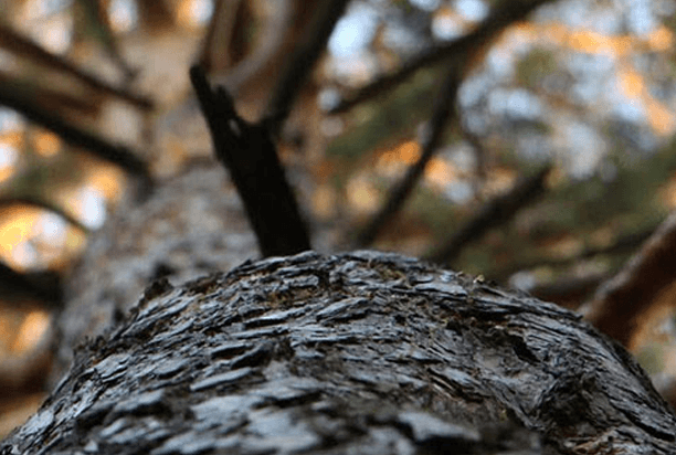 removing deadwood